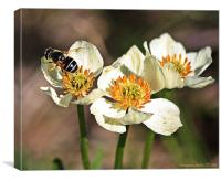 Three with a bee, Canvas Print