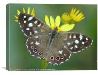 speckledwood butterfly, Canvas Print