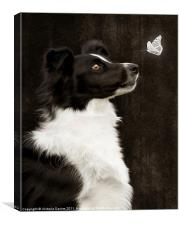 Border Collie with Butterfly, Canvas Print