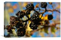 Dying Blackberrys, Canvas Print