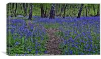 The Bluebells of Kings Wood, Canvas Print