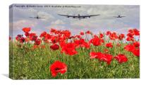 Poppy Fly Over, Canvas Print