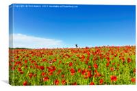 Poppies And A Photographer, Canvas Print
