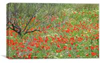 Meadow of wild flowers, Canvas Print