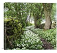 Wild Garlic Walk, Canvas Print
