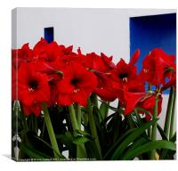 Red Amaryllis, Canvas Print