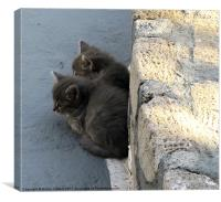 Kittens keeping cool, Canvas Print