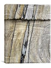 NATURAL lines in tree trunk, Canvas Print