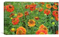 Bright orange flowers with honey bees, Canvas Print