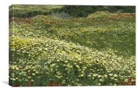Chamomile & yellows, Greek Island, Canvas Print