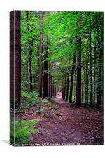 Forest Walk, Canvas Print