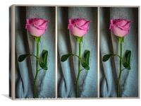 Dewed Rose Triptych, Canvas Print