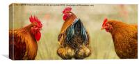 Hens. Hen Party. Look At The State Of That!, Canvas Print
