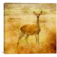 Deer, Canvas Print
