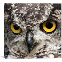 Birds Of Prey.  Look Into My Eyes My Eyes. , Canvas Print