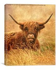 The Hairy Highlander Collection. Happy Highlander, Canvas Print