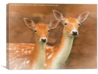Two Fallow Deer, Canvas Print