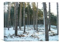 Trees in the snow.   photo contest 8-2011, Canvas Print