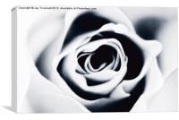 In Bloom, Canvas Print