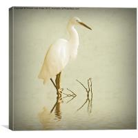 Little Egret 2, Canvas Print