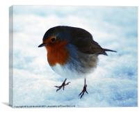 Snow Robin, Canvas Print