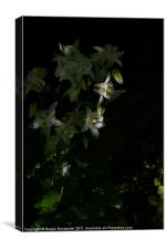 White flower in shade, Canvas Print