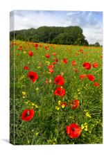 Poppies in field, Canvas Print