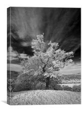 Snowy Tree, Canvas Print