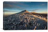Frosted Grass in the Beacons, Canvas Print