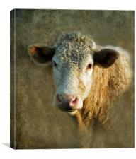 Young Bull, Canvas Print
