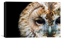 Portrait of a Tawny Owl, Canvas Print