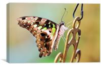 Tailed Jay, Canvas Print