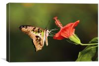 Tailed Jay Butterfly, Canvas Print