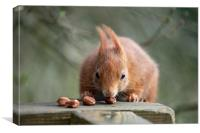 Look At My Nuts, Canvas Print