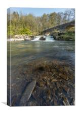 River Torridge weir, Canvas Print