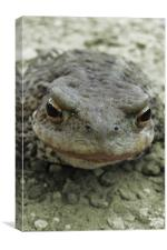 Toad, Canvas Print