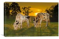 Grazing in the Golden Light, Canvas Print