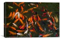 Feeding Frenzy, Canvas Print