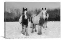 Horses in snow, Canvas Print