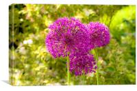 Alliums, Canvas Print