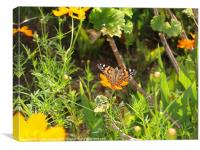 Butterfly in Greek garden, Canvas Print