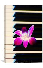 Orchid and the Keys, Canvas Print