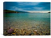 Lonely Urchin On A Pebble Beach, Canvas Print