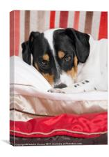 Cute Jack Russell Terrier Dog, Canvas Print