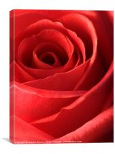 Romantic Red Rose, Canvas Print
