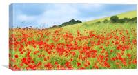 Field of Poppies, Canvas Print