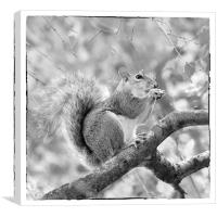 Squirrel in a Tree - Black and White, Canvas Print