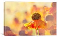 Sunlit Helenium Flowers with Texture Effect, Canvas Print