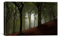 Trees Of The Forest, Canvas Print
