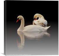 Beautiful Swans, Canvas Print
